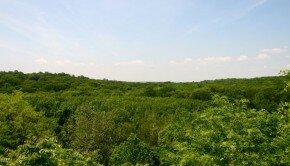 green-belt-image